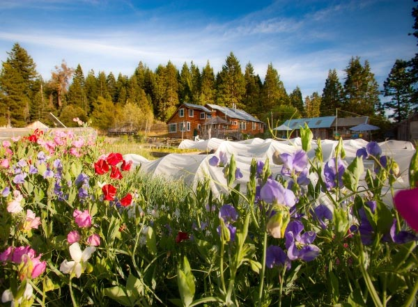 Willow-Witt Ranch is Oregon Tilth certified organic