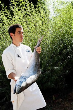 chef with king salmon