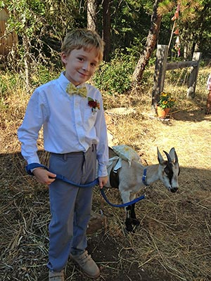 Got the Rings - ring bearer leading goat with rings